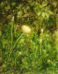 image of oil painting Dandelions by Laurie Ladmore