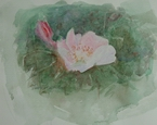 image of floral watercolor painting Wild Rose by David Ladmore